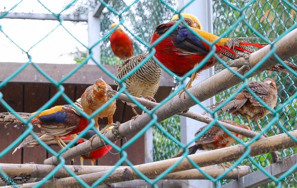 花蓮農場.花蓮免費親子景點》台開心農場,梅花鹿、馬場、孔雀、賞鳥 @緹雅瑪 美食旅遊趣