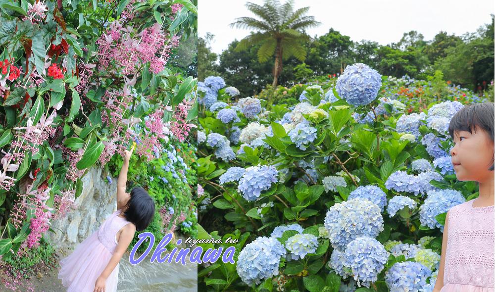 沖繩繡球花&沖繩賞花》饒平名繡球花園|よへなあじさい園 @緹雅瑪 美食旅遊趣