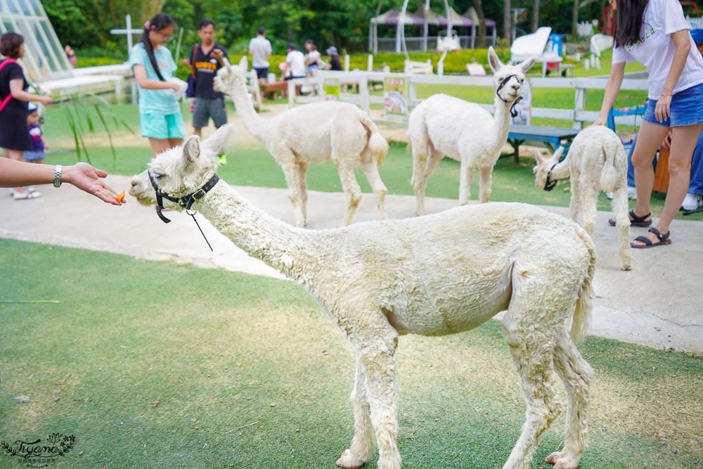 桃園景點.桃園農場》富田花園農場,羊駝野放農場,餵食動物零距離!! @緹雅瑪 美食旅遊趣
