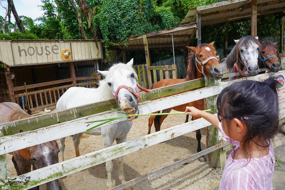 桃園景點.桃園農場》2020富田花園農場,羊駝野放農場,餵食動物零距離!! @緹雅瑪 美食旅遊趣