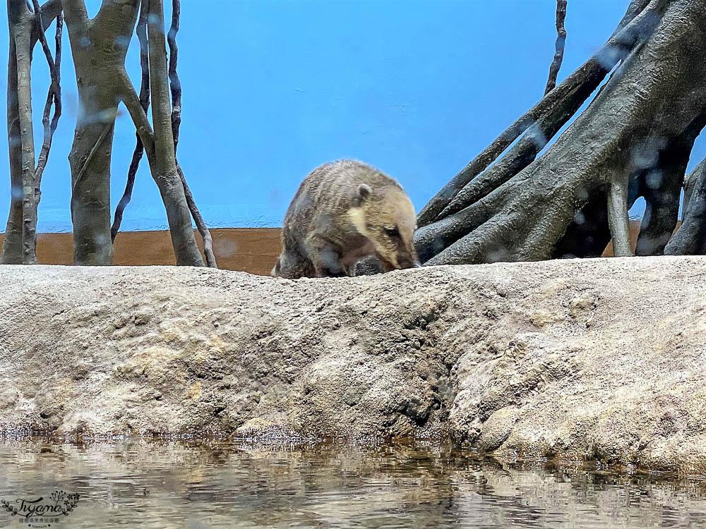 桃園Xpark水族館攻略&企鵝咖啡廳 門票.交通,桃園新景點 Xpark 都會型水生公園 @緹雅瑪 美食旅遊趣