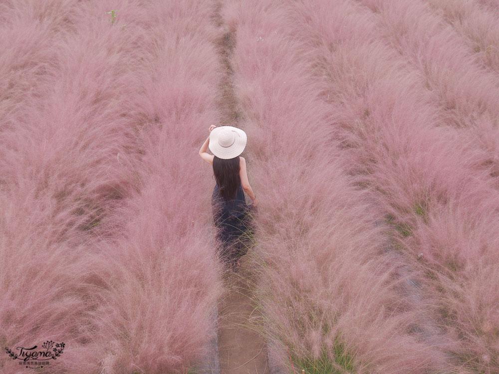 秒到韓國粉黛亂子草花海》和平快樂田園,夢幻如仙境的南投新景點!! @緹雅瑪 美食旅遊趣