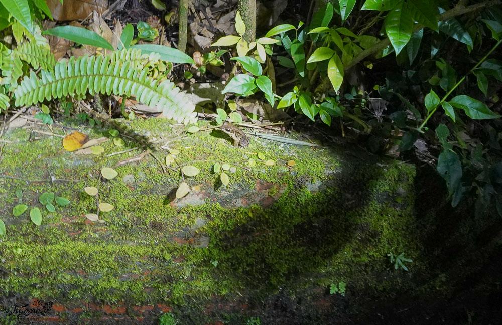 南投埔里桃米生態探索「夜間賞蛙」,桃米農遊夜間賞蛙溯溪生態之旅! @緹雅瑪 美食旅遊趣
