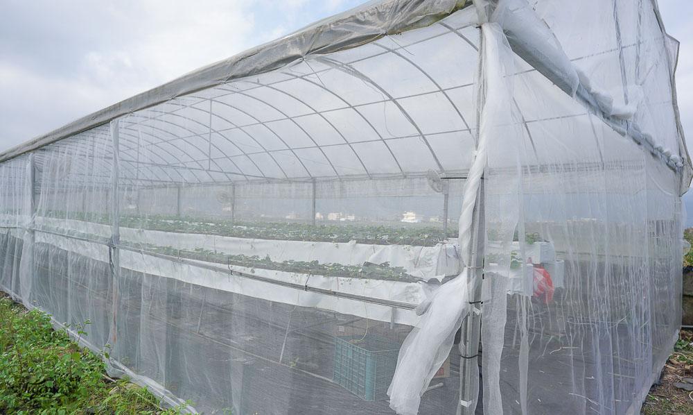 宜蘭採草莓》本事農莊:有機紅草莓、日本白草莓、粉紅草莓,室內溫室精緻栽種,不用洗就可以吃的白草莓!! @緹雅瑪 美食旅遊趣