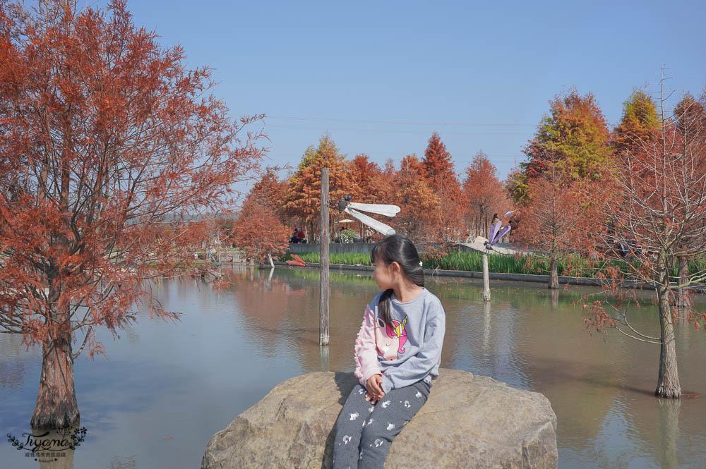 台中落羽松景點》后里泰安·羽粼落羽松,打造網美場景的人氣落羽松景點|泰安國小旁 @緹雅瑪 美食旅遊趣
