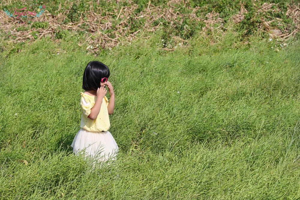 學甲蜀葵花海|蜀葵迷宮|台南花季免費景點:繽粉蜀葵、金色麥田、紅藜麥田、美食攤位,好美好好玩!! @緹雅瑪 美食旅遊趣