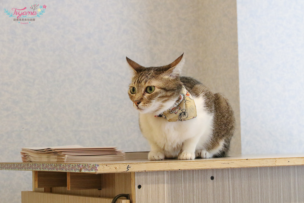 與貓咪零距離接觸|貓門咖啡:南園街重新移店開張,與貓的約會~台南下午茶推薦!! @緹雅瑪 美食旅遊趣