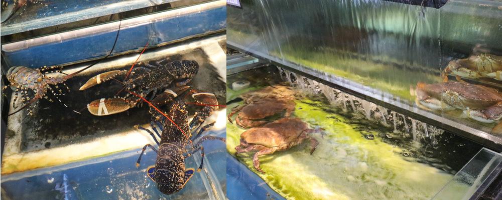台中海鮮餐廳|鼎陶蒸 蒸汽海鮮鍋物 永春店:現蒸生猛海鮮,漁港直送!!蒸的好鮮~ @緹雅瑪 美食旅遊趣