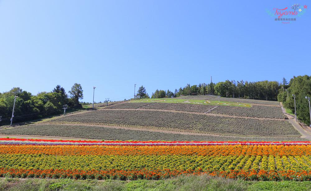 北海道農場|富田農場&中富良野町營薰衣草園,巧遇向日葵花田 @緹雅瑪 美食旅遊趣