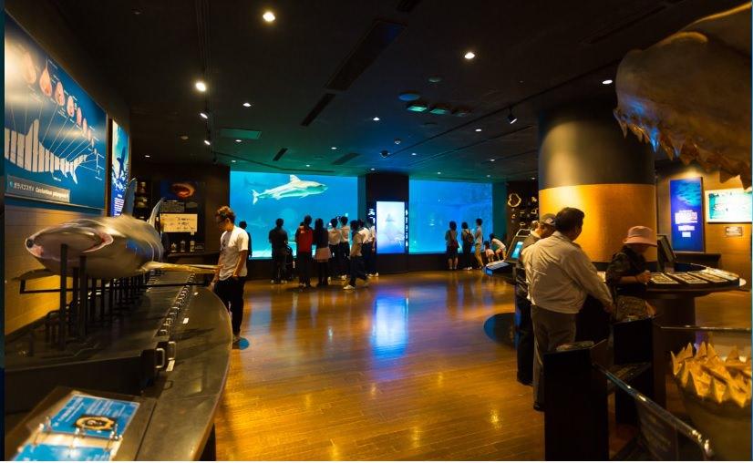 沖繩美麗海水族館:巨大水族箱!黑潮之海鯨鯊.海豚秀,沖繩必遊景點 @緹雅瑪 美食旅遊趣