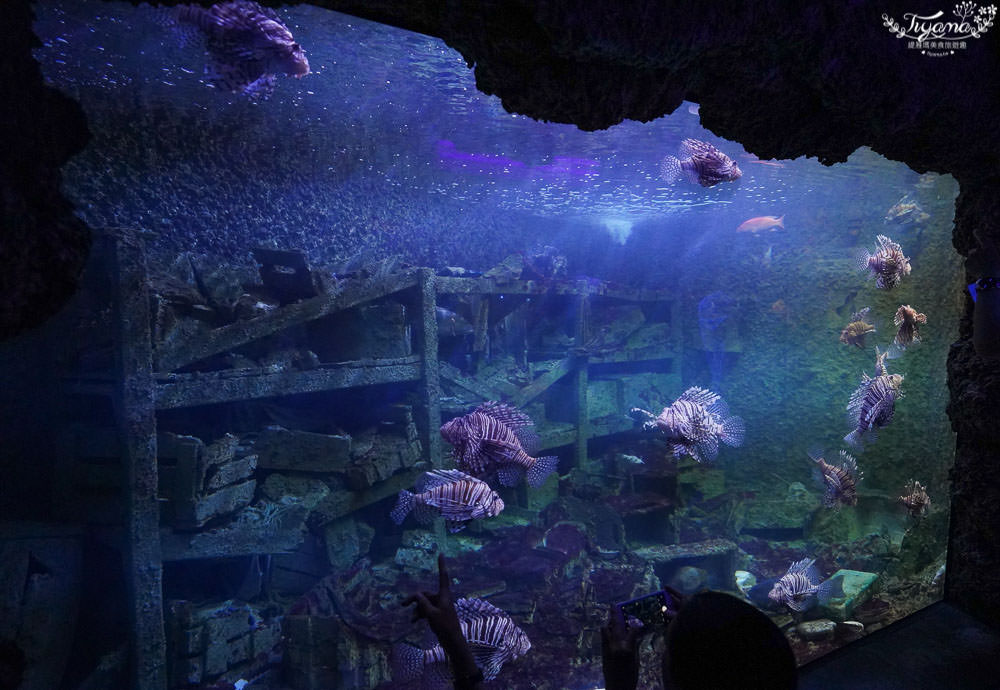 屏東海生館|屏東國立海洋生物博物館:夜宿海生館.VR體驗.珊瑚王國館後台導覽,好好玩!! @緹雅瑪 美食旅遊趣