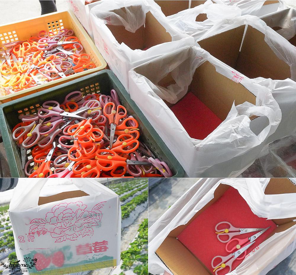 高雄採草莓,三本鮮莓園,採草莓囉!!大崗山超峰寺參拜後的親子旅遊 @緹雅瑪 美食旅遊趣