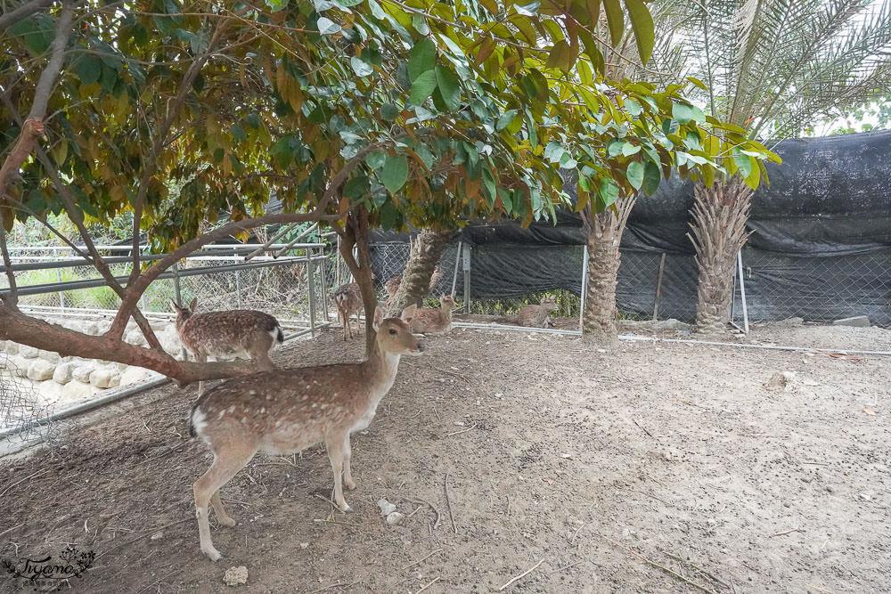 屏東景點.墾丁餵鹿,阿信巧克力農場,可愛小動物、可可體驗之旅 @緹雅瑪 美食旅遊趣