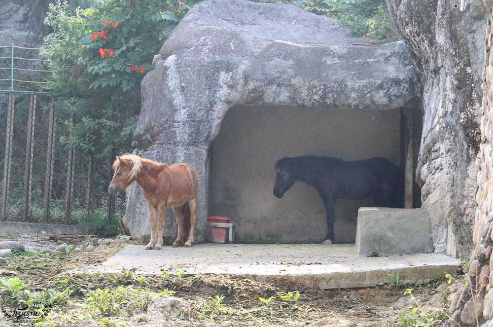 高雄動物園|壽山動物園:兒童牧場免費餵羊趣,高雄人氣親子景點 @緹雅瑪 美食旅遊趣