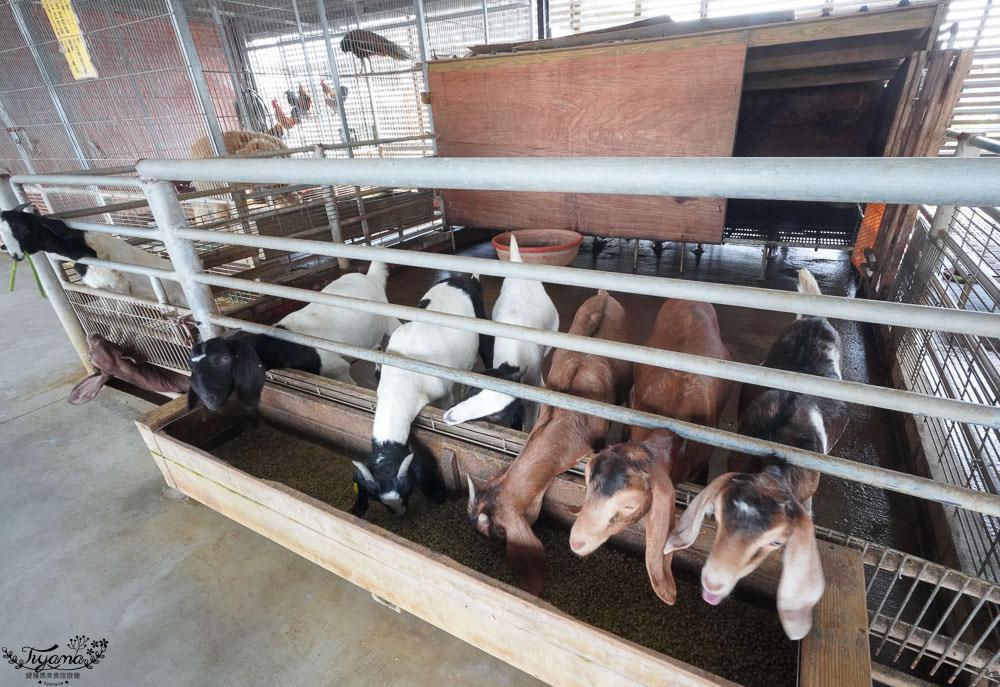 台南時令小旅行.台南一日遊》亮哥生態風味體驗養殖場|麻豆吉園休閒農場|乳牛的家,吃現撈海鮮、吃窯烤麵包採柚子、喝牧場牛乳餵小動物 @緹雅瑪 美食旅遊趣