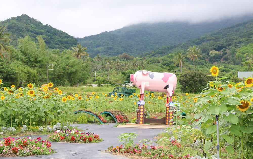 台東花海|成功花海,成功鎮農會農特產品展售中心對面的美麗後花園 @緹雅瑪 美食旅遊趣