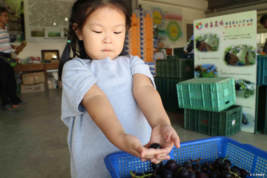 【南投景點.水里鄉】甘喜農場。現採葡萄體驗:「季節限定」親子同遊好去處 @緹雅瑪 美食旅遊趣